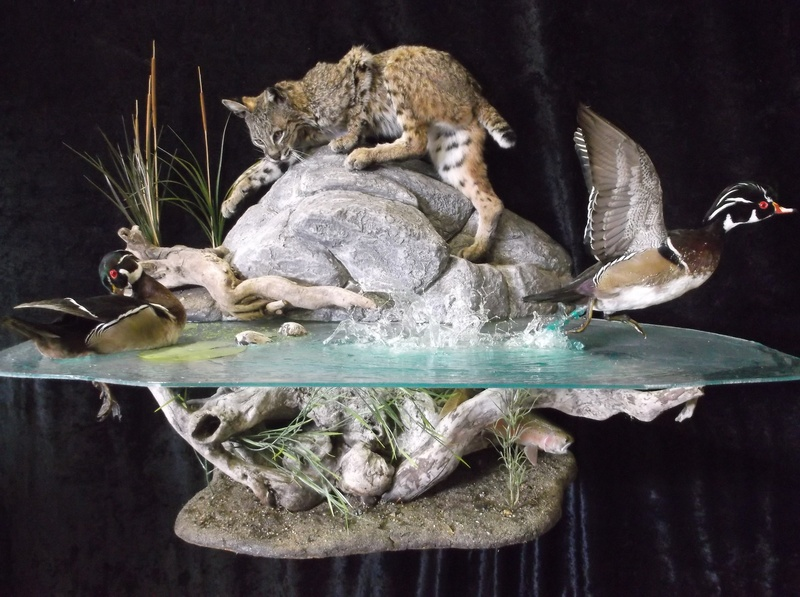 Home oregon taxidermy workshop our taxidermy workshop is based upon the idea that the best way to acquire the skills needed to perform top quality artistry in taxidermy is to do them solutioingenieria Images